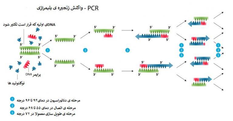 واکنش زنجیره ی پلیمرازی یا پی سی ار