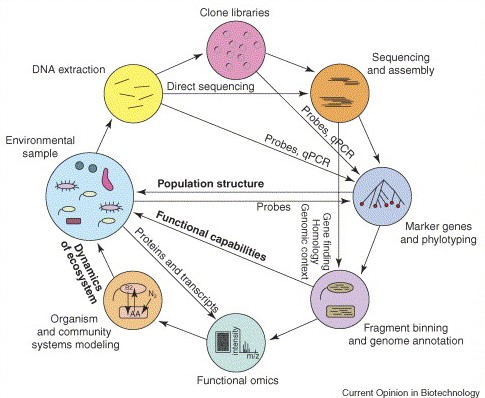 genomic sequence of an organism