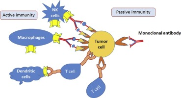 Passive and active immunotherapy