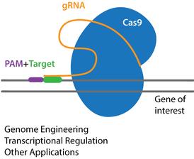 کریسپر و gRNA